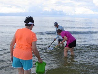 Catching Blue Crab at the Beach