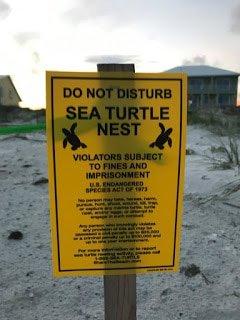 do not disturb sea turtle nest sign