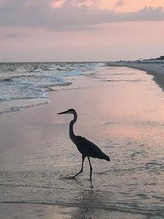 Bird at sunset on the beach