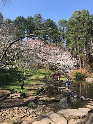 Blooming trees by pond