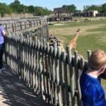 Raised Walkway at Frank Buck Zoo