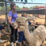Sharkarosa Petting Zoo