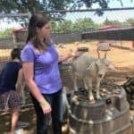 Sharkarosa Goat