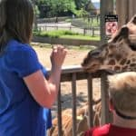 Feeding Giraffes at Sedgwick County Zoo