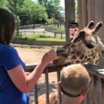 Giraffe Feeding at Sedgwick County Zoo