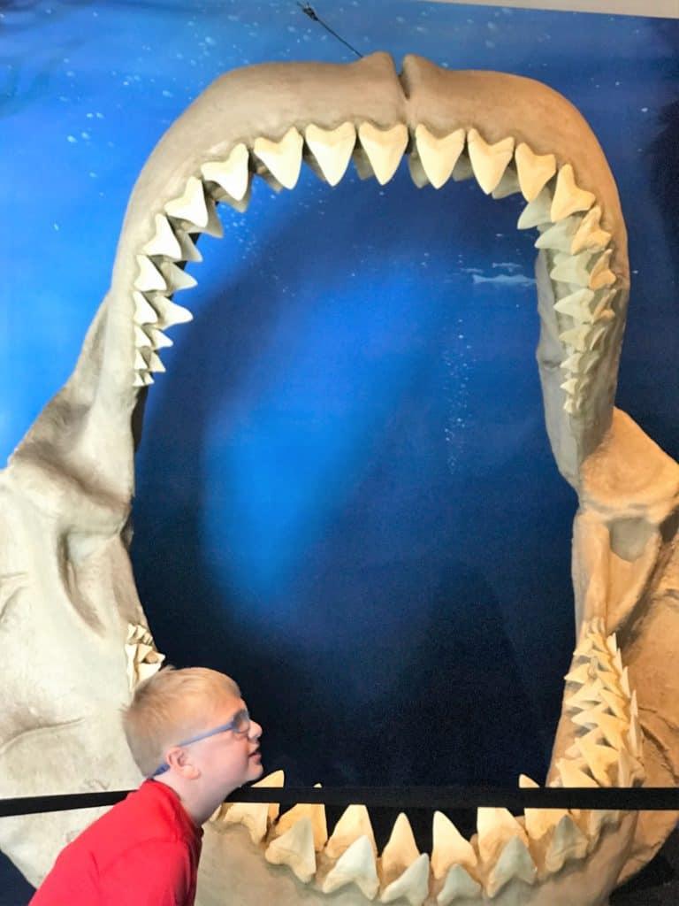 Shark Display at Exploration Place